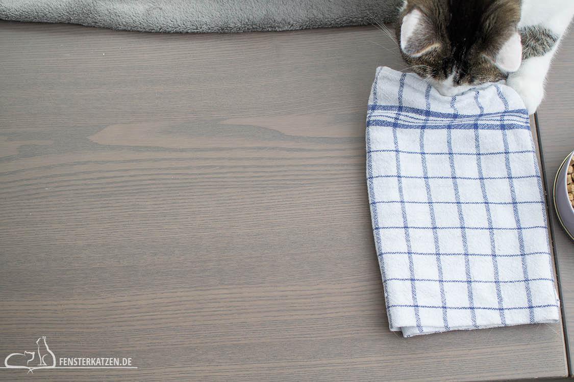 Fensterkatzen-Alltag-3-Futterspiele-Koerper-Koepfchen-Handtuch-Schwierigkeitsgrad