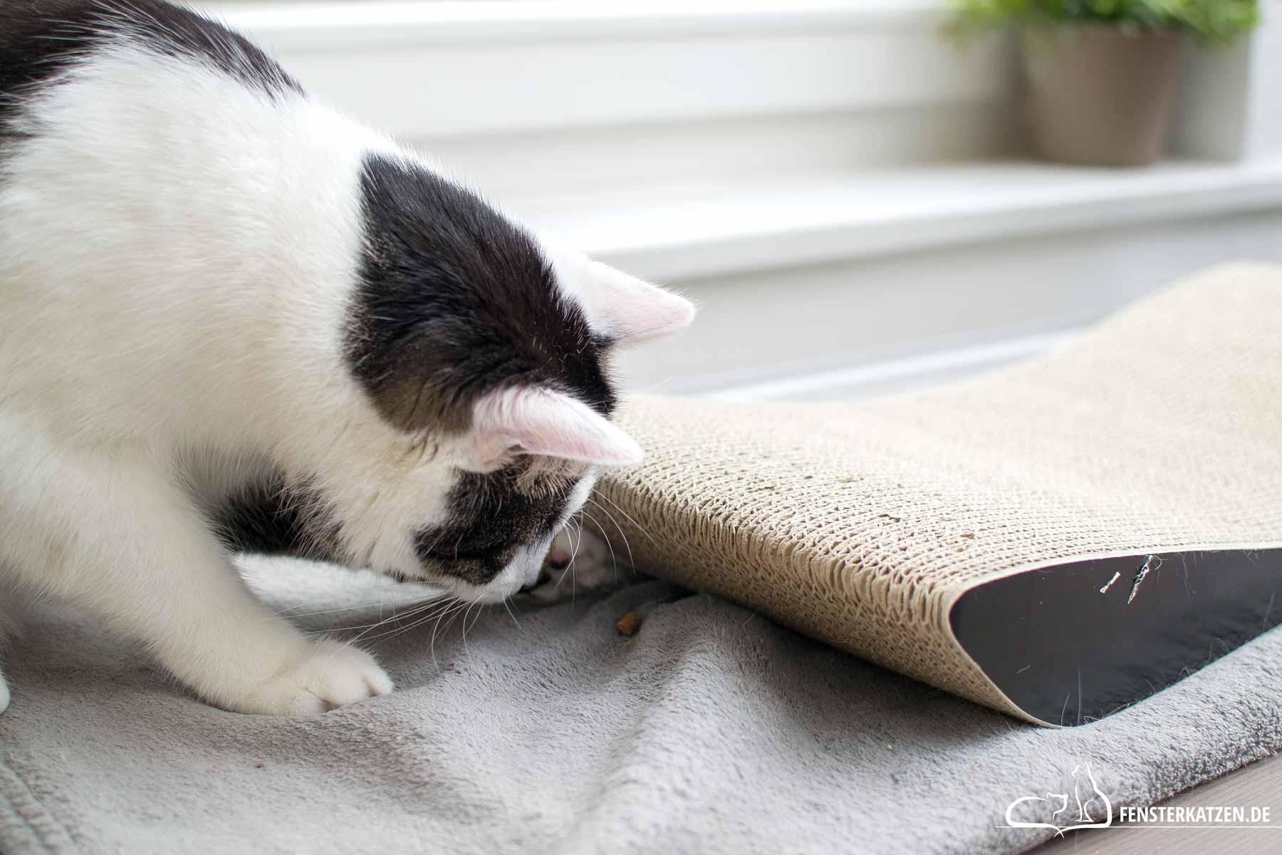 Fensterkatzen-Alltag-3-Futterspiele-fuer-Koerper-Koepfchen-Titelbild