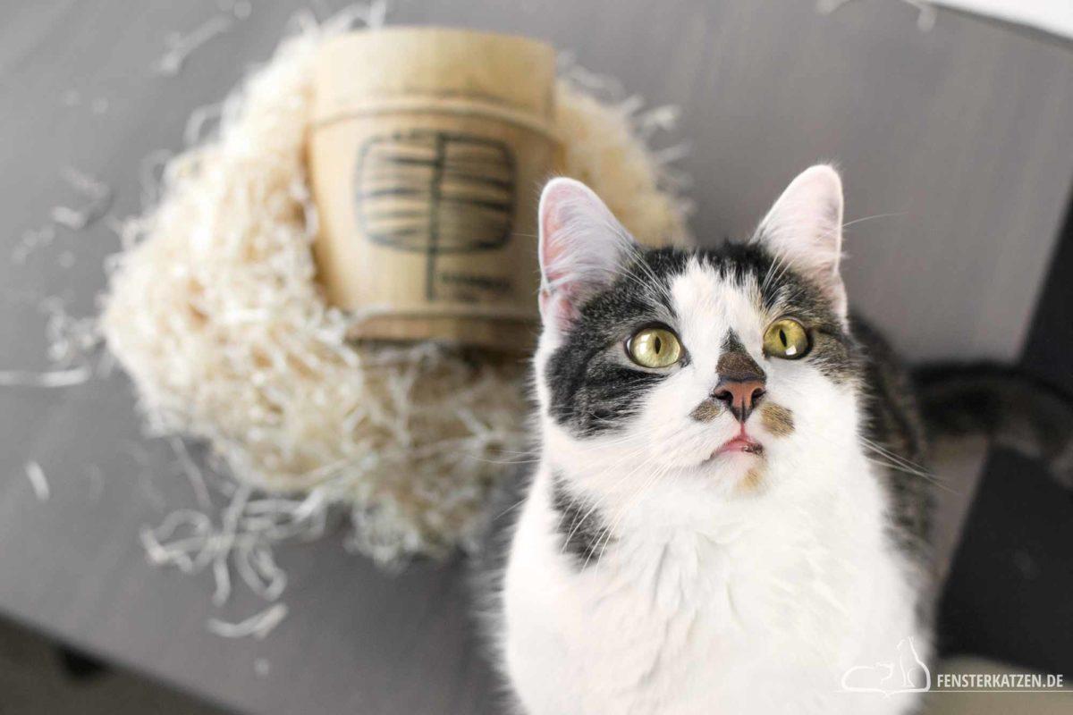 Fensterkatzen-Ratgeber-Katze-stirbt-Moeglichkeiten-Titelbild