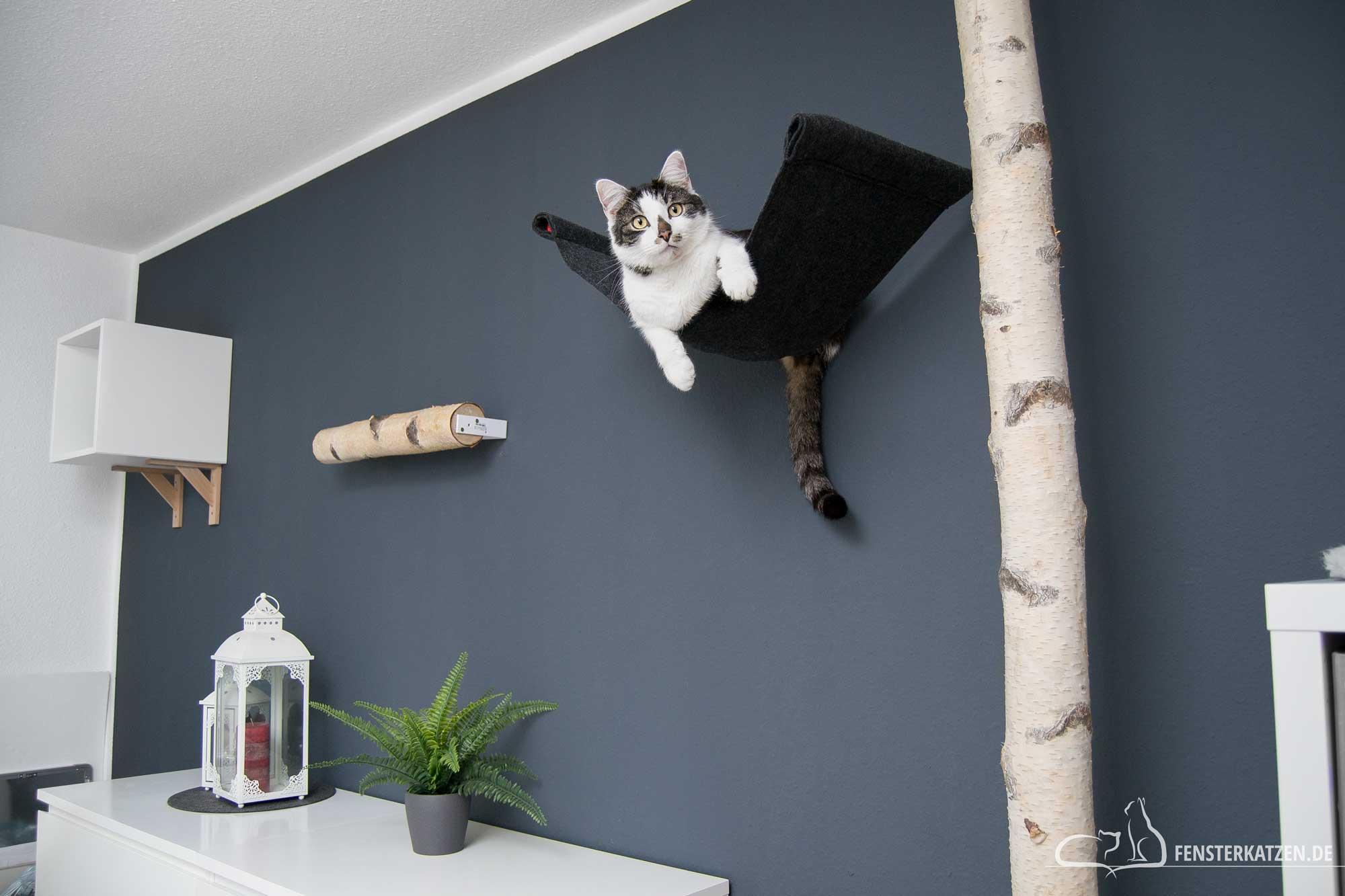 Fensterkatzen-DIY-Catwalk-Kletterwand-Katzen-Titelbild