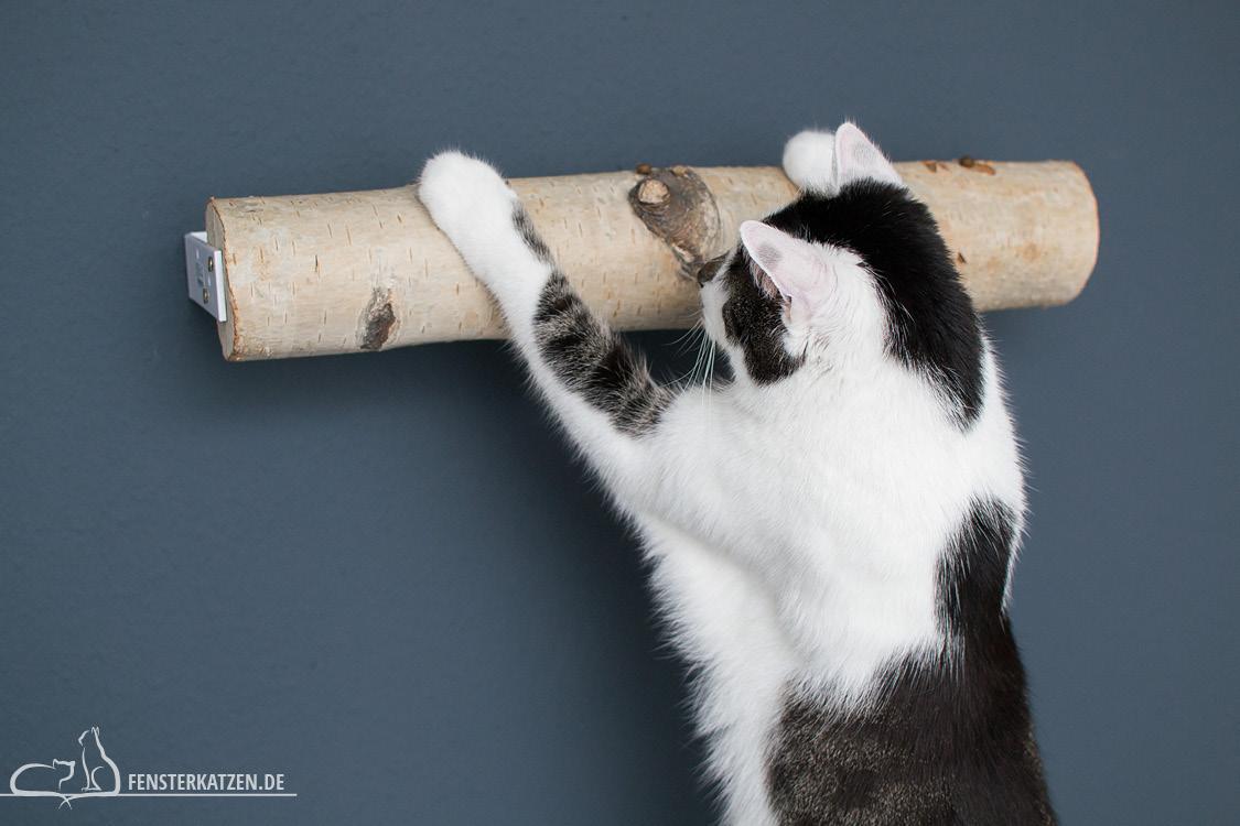 Fensterkatzen-Do-It-Yourself-DIY-Catwalk-Kletterwand-Interaktion-1