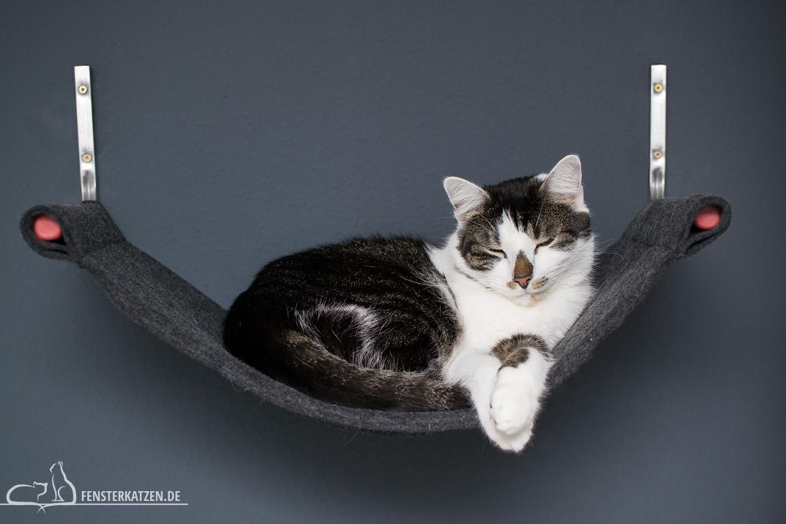 Catwalk – Kletterwand für Katzen   DIY