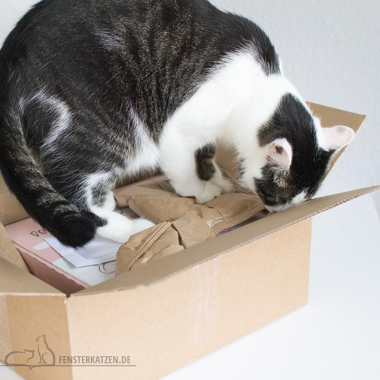 Fensterkatzen-Getestet-Goodie-Box-Zookauf-Shop-Flash-Karton-Schnueffeln