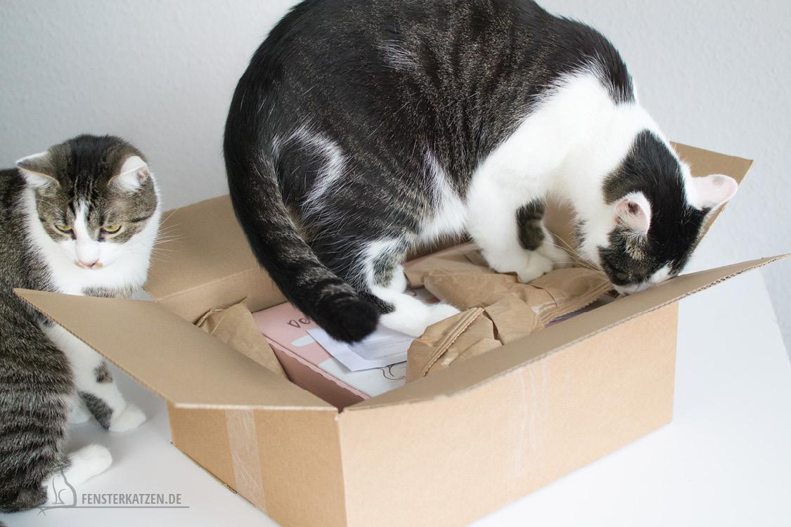 Fensterkatzen-Getestet-Goodie-Box-Zookauf-Shop-Flash-Karton