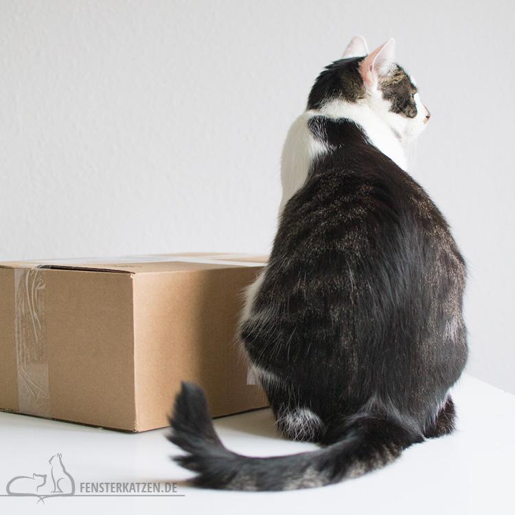 Fensterkatzen-Getestet-Goodie-Box-Zookauf-Shop-Flash-Stillleben