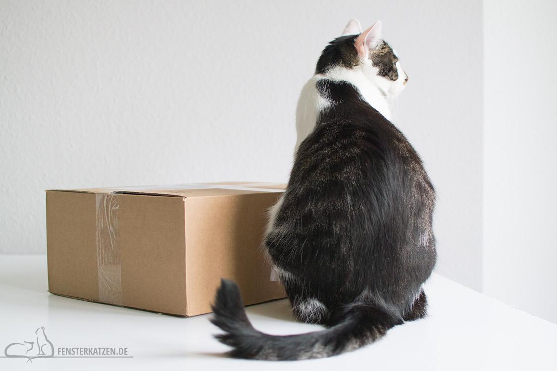 Fensterkatzen-Getestet-Goodie-Box-Zookauf-Shop-Flash