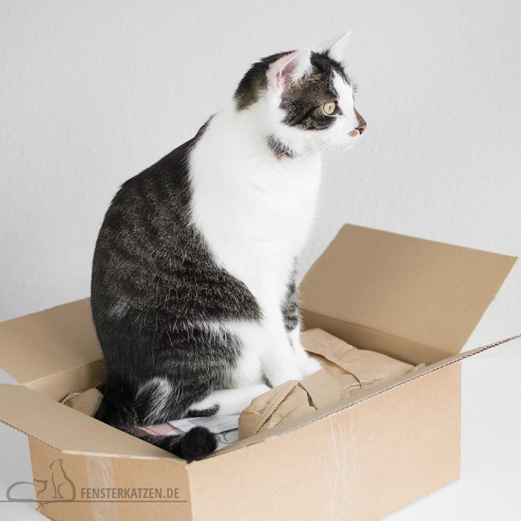 Fensterkatzen-Getestet-Goodie-Box-Zookauf-Shop-Flash_Belagerung