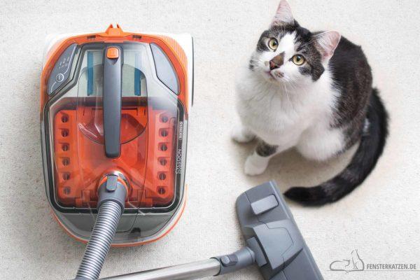 Fensterkatzen-Getestet-Tierhaar-Staubsauger-Cycloon-Hybrid-Pet-Friends-Thomas-Titelbild