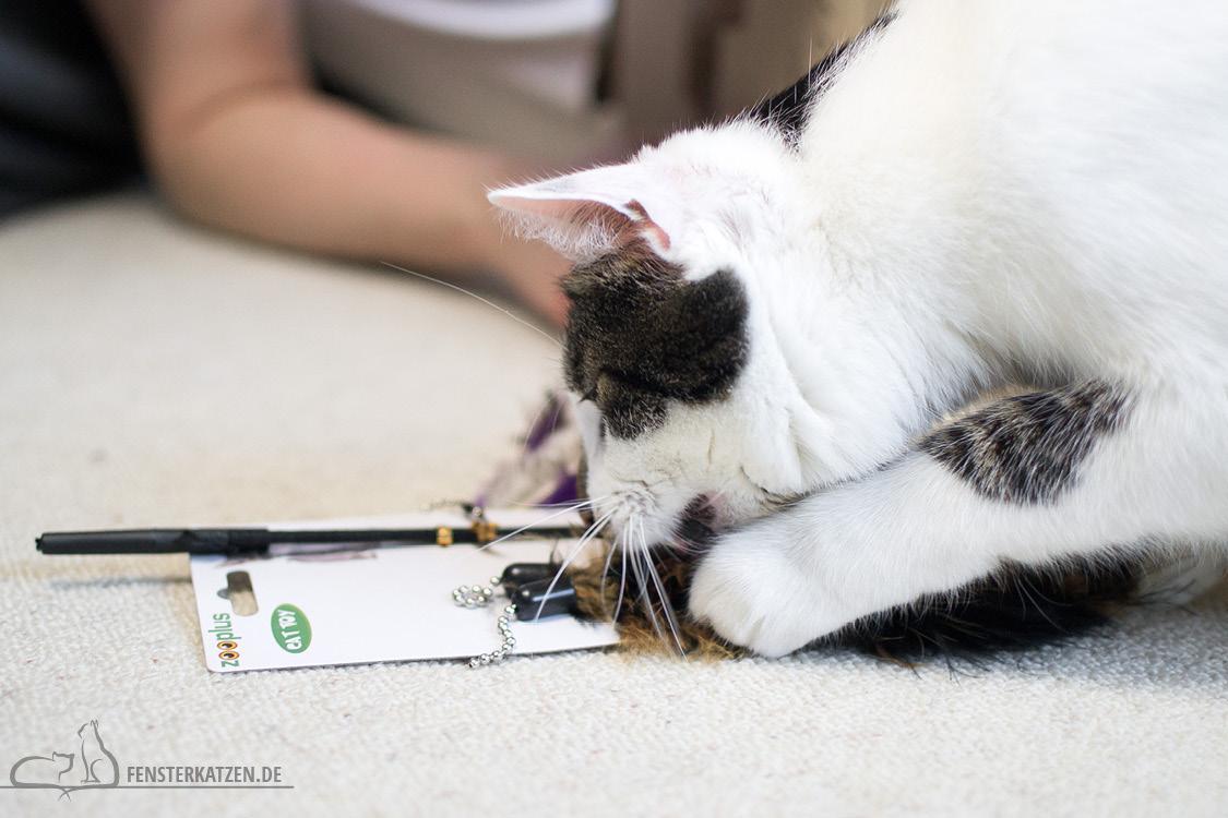 Fensterkatzen-Alltag-Tauschpaket-Blogkatzen-04