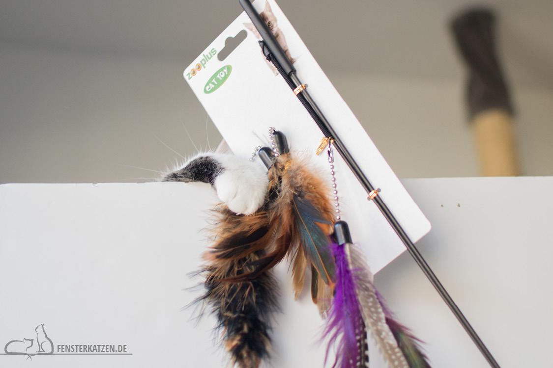 Fensterkatzen-Alltag-Tauschpaket-Blogkatzen-Angel-Outtake