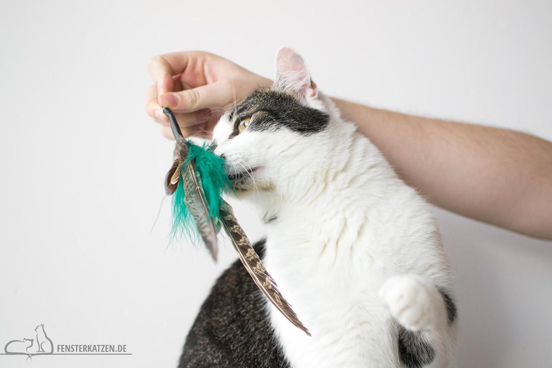 Fensterkatzen-Alltag-Tauschpaket-Blogkatzen-Anhaenger-Flash-01