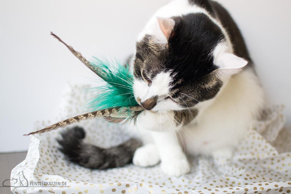 Fensterkatzen-Alltag-Tauschpaket-Blogkatzen-Anhaenger-Flash-02