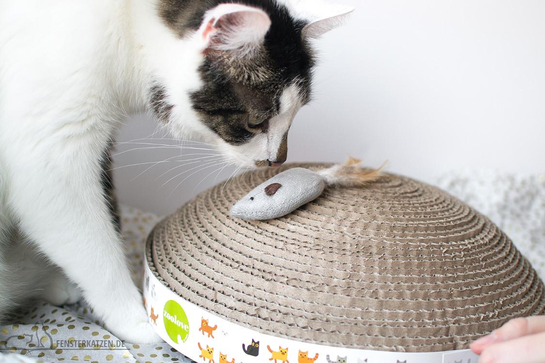 Fensterkatzen-Alltag-Tauschpaket-Blogkatzen-Kratzpappe-Flash