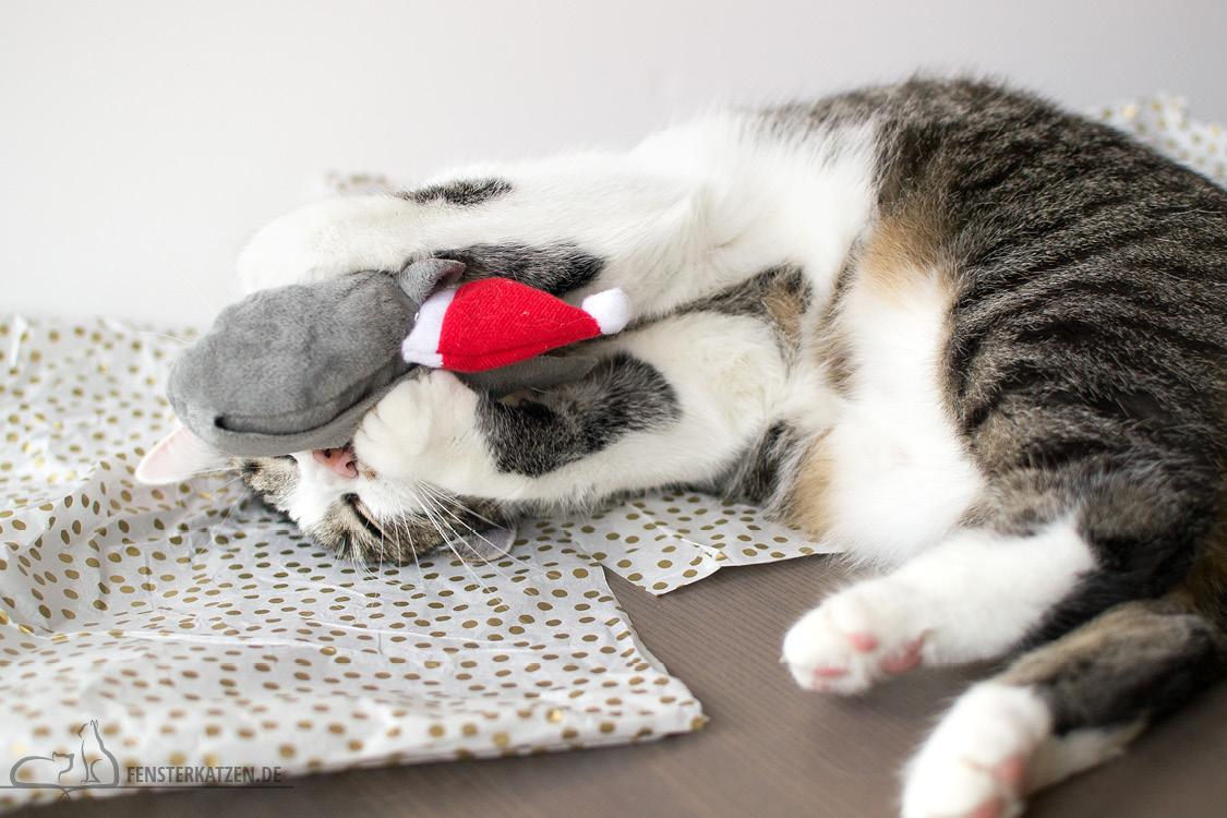 Fensterkatzen-Alltag-Tauschpaket-Blogkatzen-Nala-02