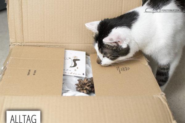 Fensterkatzen-Alltag-Tauschpaket-Katze-Kitten-Kater-Titelbild