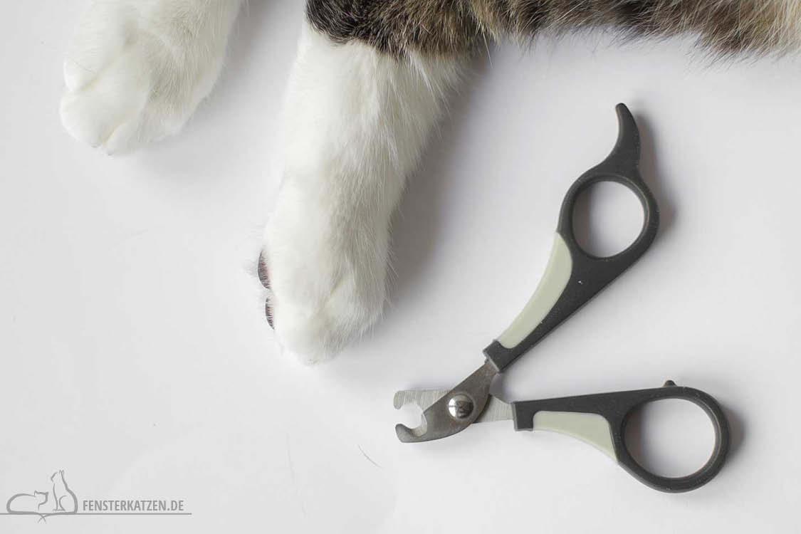 Fensterkatzen-Ratgeber-Katzenapotheke-Krallenschere