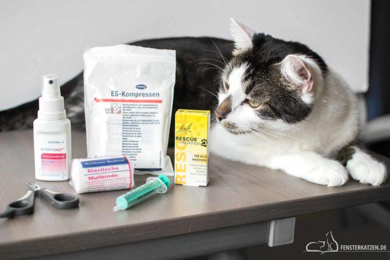 Katzenapotheke – Was sollte ich vorrätig haben?