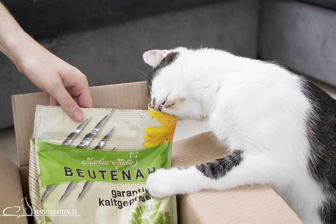 Fensterkatzen-Getestet-Beutenah-Trockenfutter-Markus-Muehle-Beissen