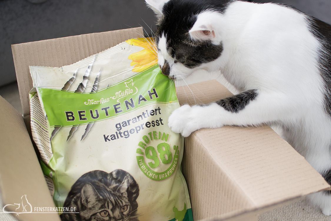 Fensterkatzen-Getestet-Beutenah-Trockenfutter-Markus-Muehle-Flash-beisst-in-Tuete