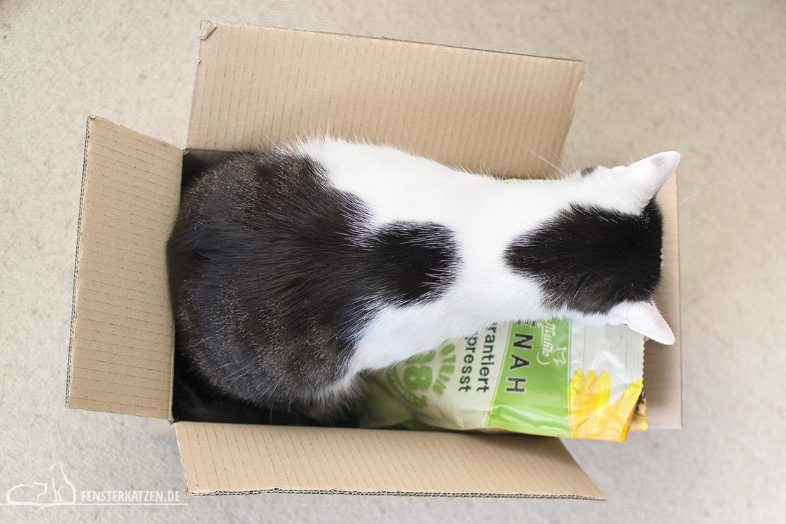 Fensterkatzen-Getestet-Beutenah-Trockenfutter-Markus-Muehle-Flash-im-Karton