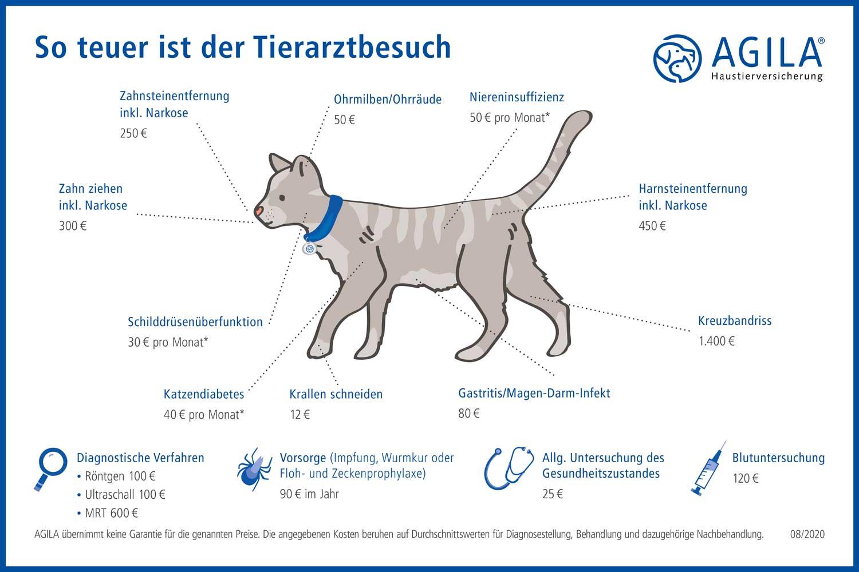 AGILA-Schaubild-Krankenschutz-Katze