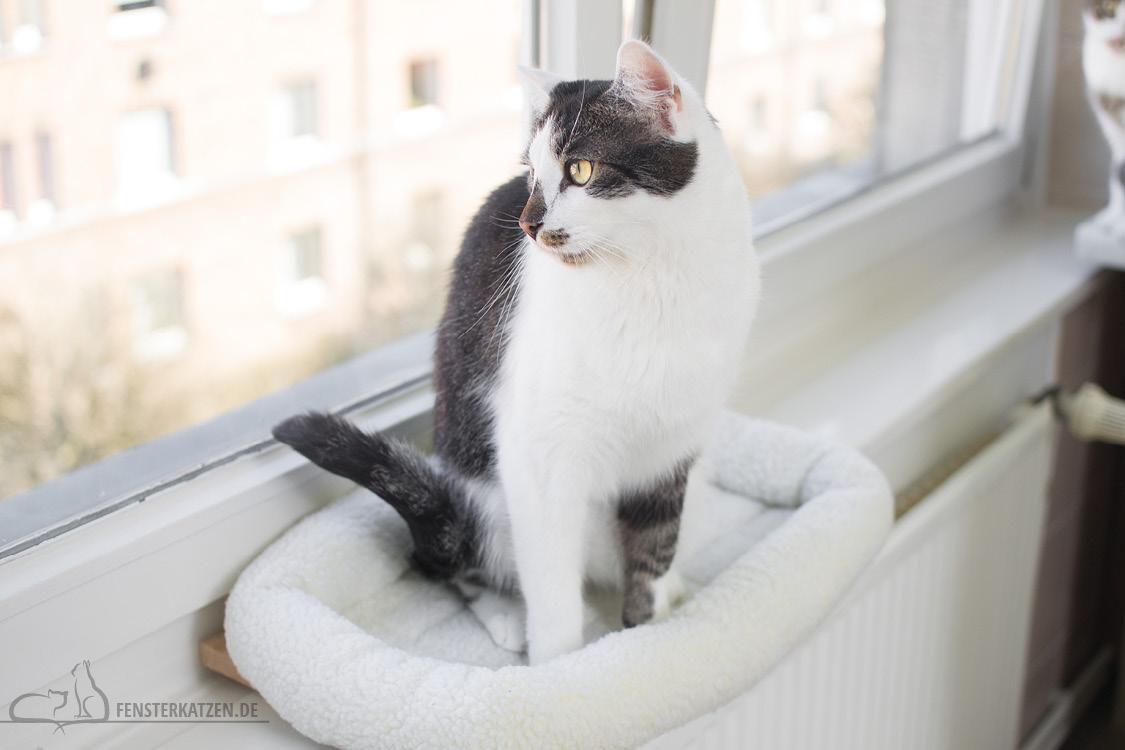 Fensterkatzen-DIY-Fensterliege-hundkatzemaus-Flash-sitzt