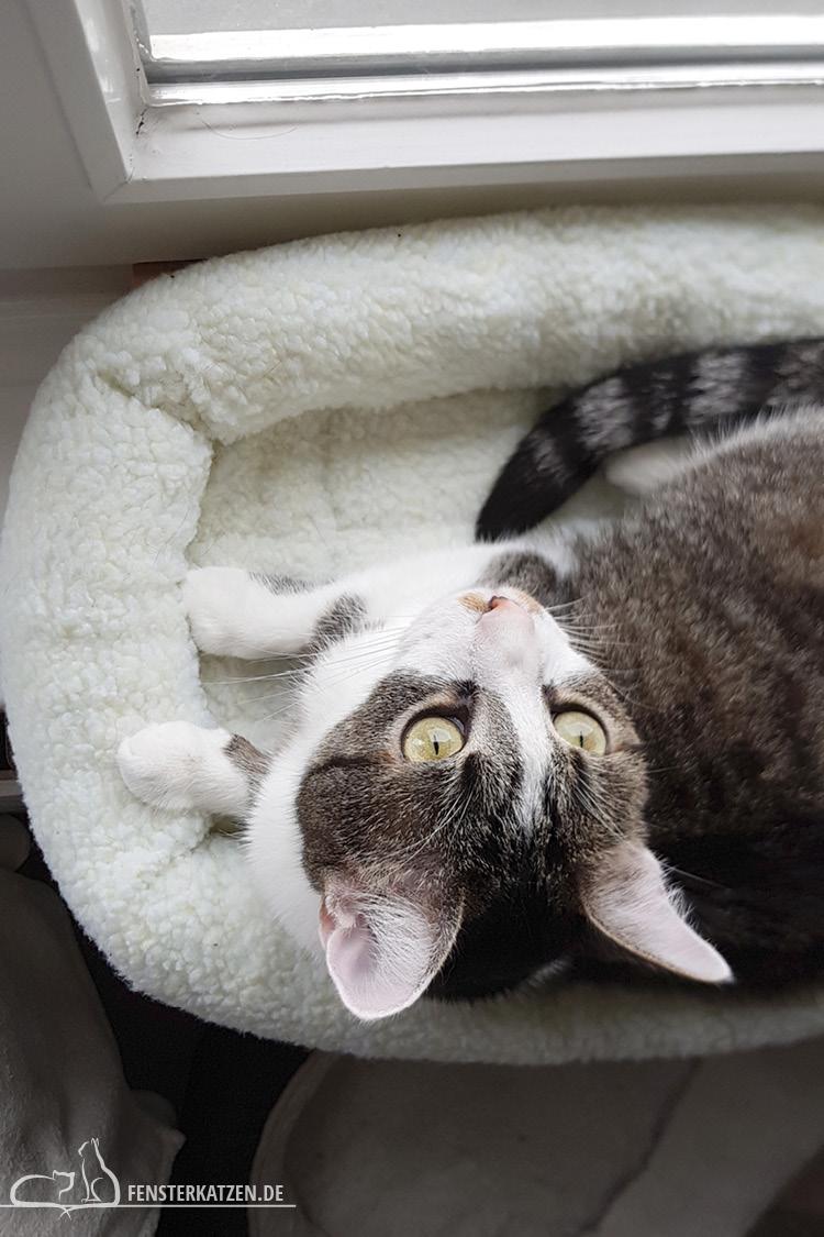 Fensterkatzen-DIY-Fensterliege-hundkatzemaus-Nala-Blick-nach-oben