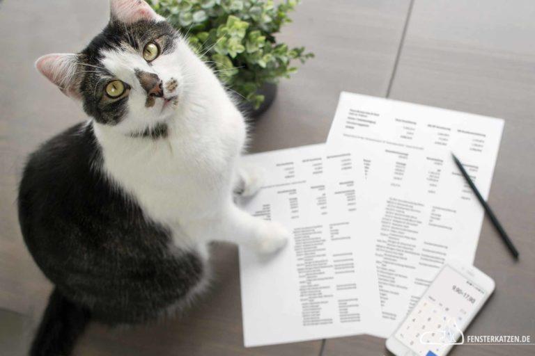 Wie sinnvoll ist eine Versicherung für Katzen?