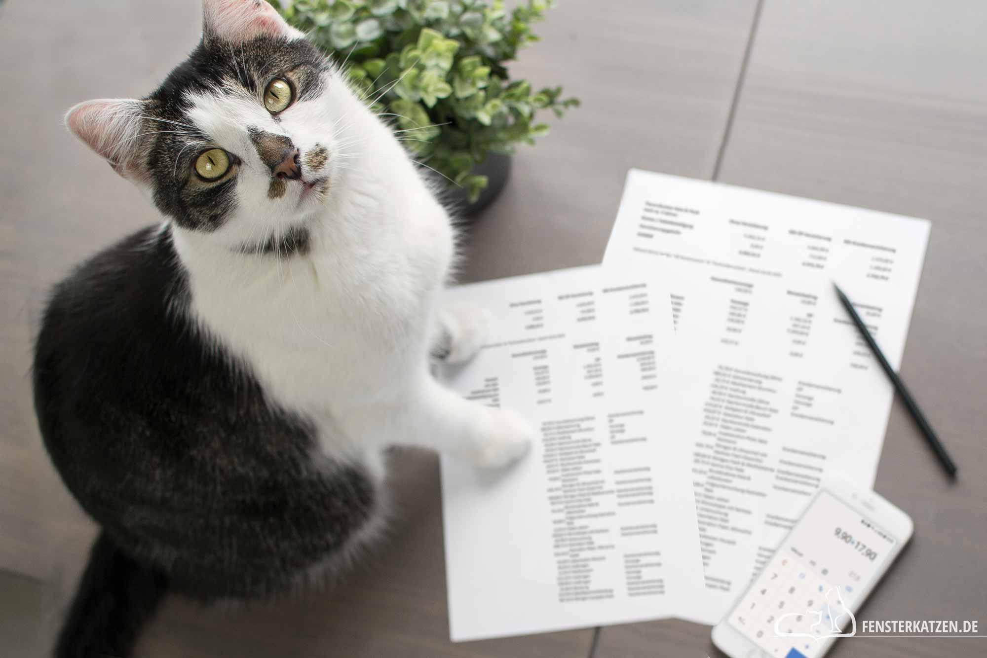 Fensterkatzen-Ratgeber-Versicherung-fuer-Katzen-sinnvoll-Titelbild