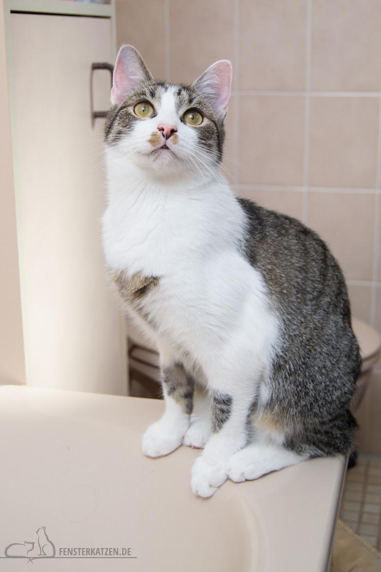 Fensterkatzen-Ratgeber-Katzensichere-Wohnung-Was-Muss-Ich-Beachten-Badewanne