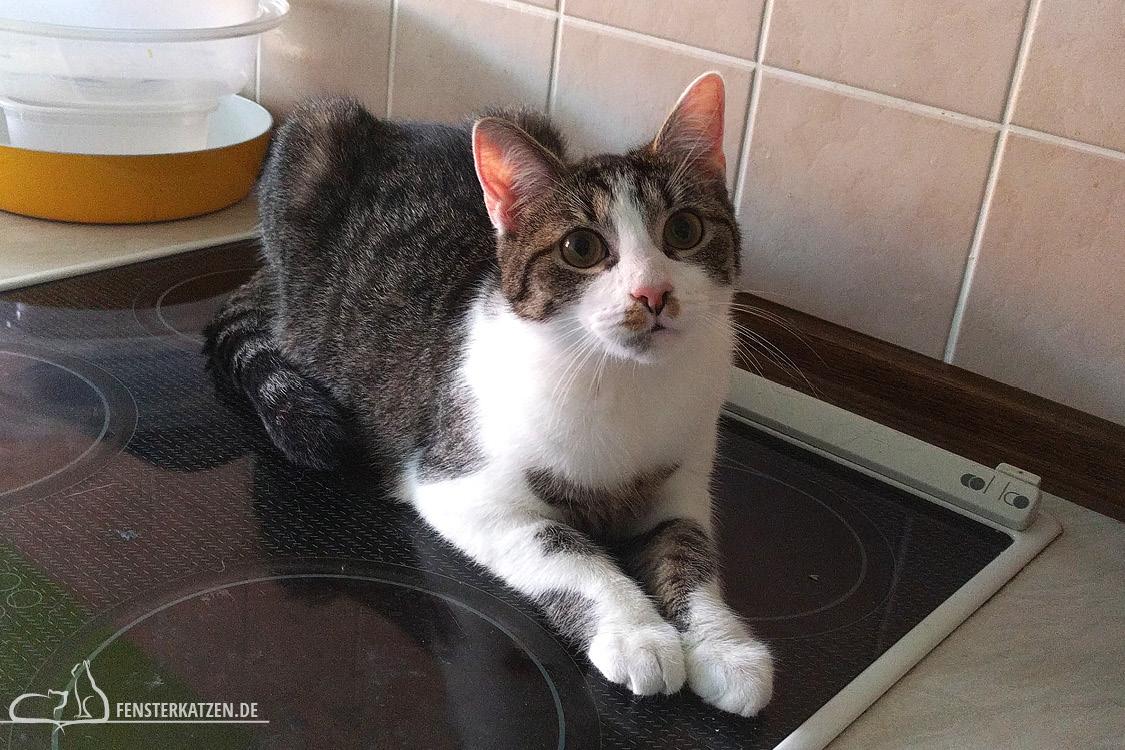 Fensterkatzen-Ratgeber-Katzensichere-Wohnung-Was-Muss-Ich-Beachten-Nala-Herd