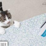 Katzensichere Wohnung – Was muss ich beachten? // TEIL 2