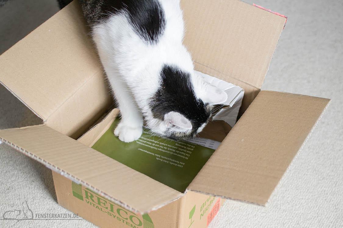 Fensterkatzen-Getestet-Katzenfutter-Leckerlis-Reico-Karton-Flash