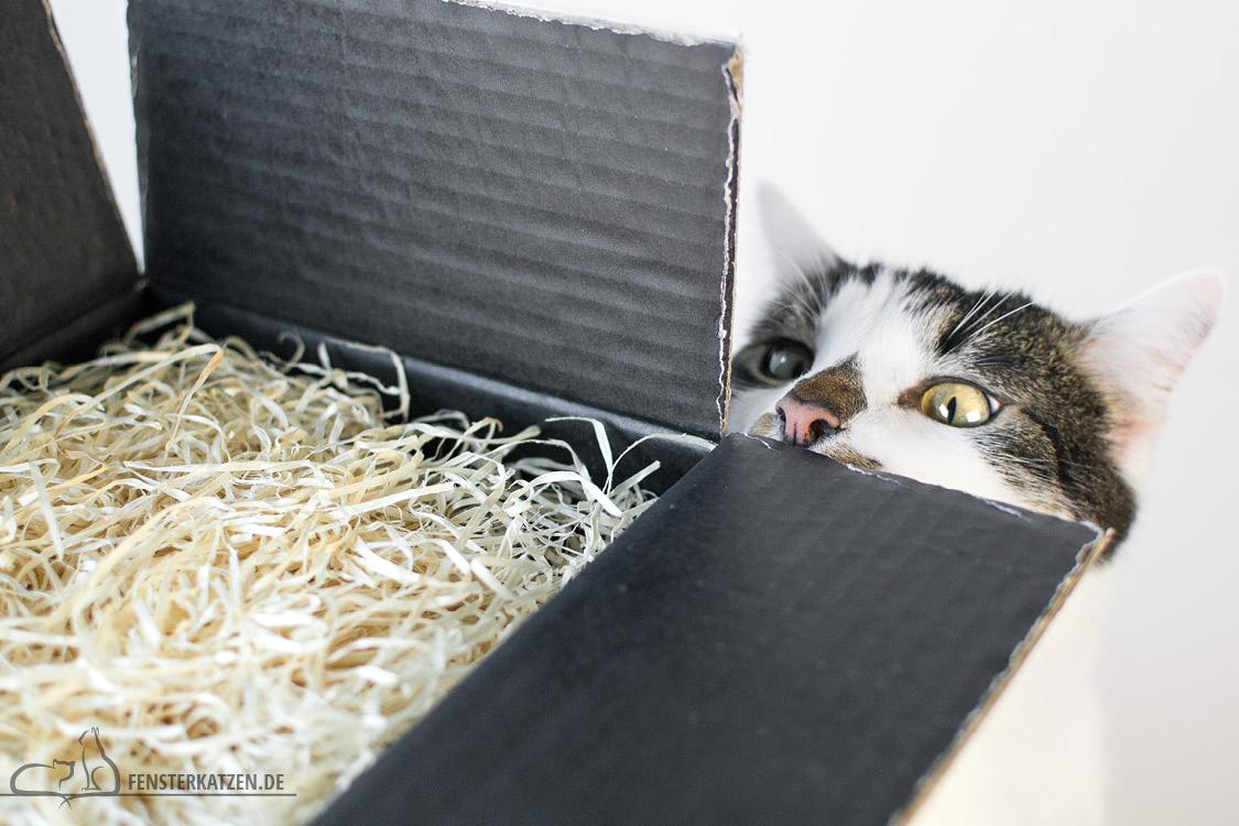 Fensterkatzen-Ratgeber-Katze-stirbt-Flash-Neugierig-Verpackung