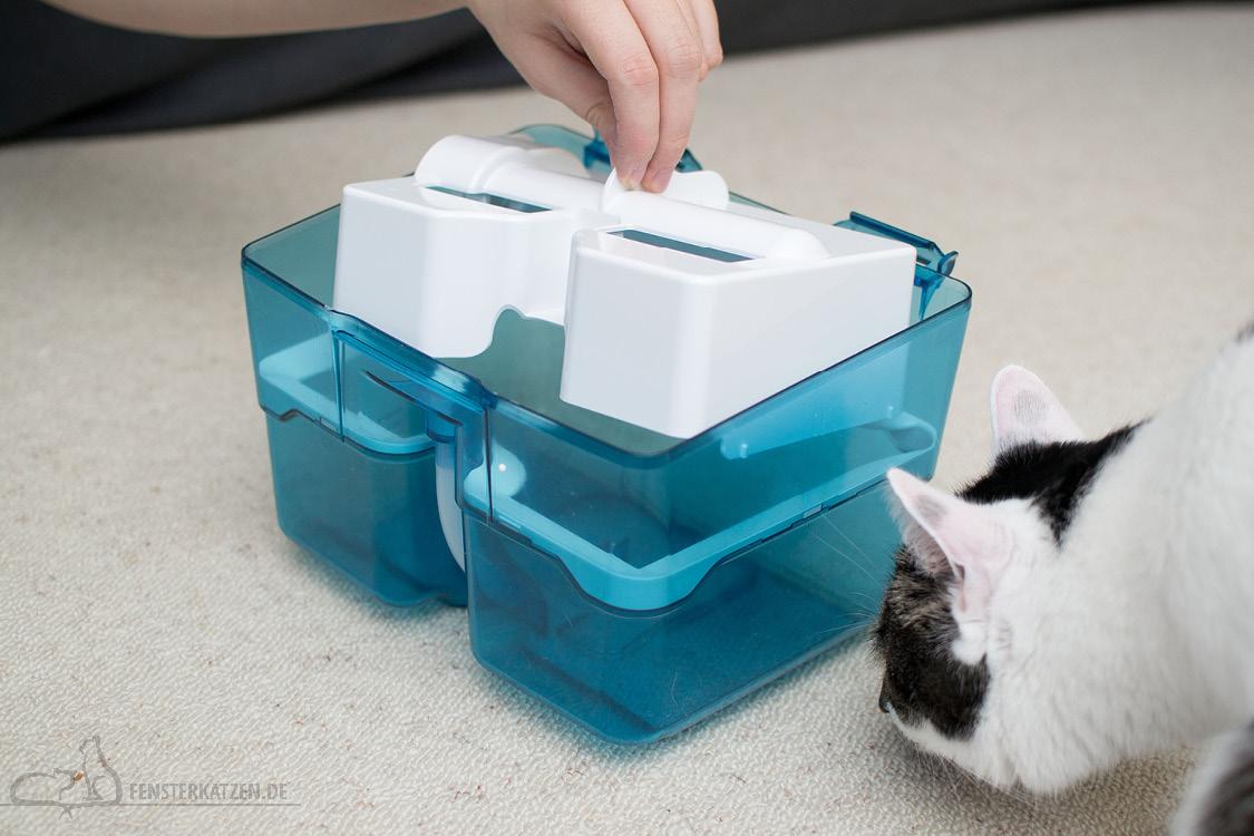 Fensterkatzen-Getestet-Cycloon-Hybrid-Pet-Friends-Thomas-aqua-frische-box