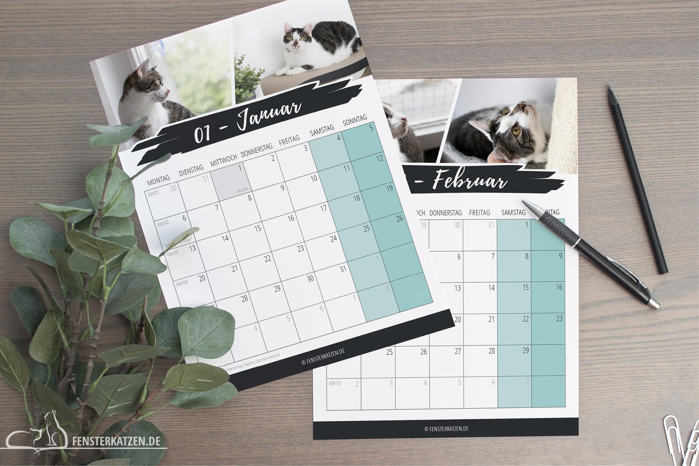 Fensterkatzen-News-Kalender-2020-Felder
