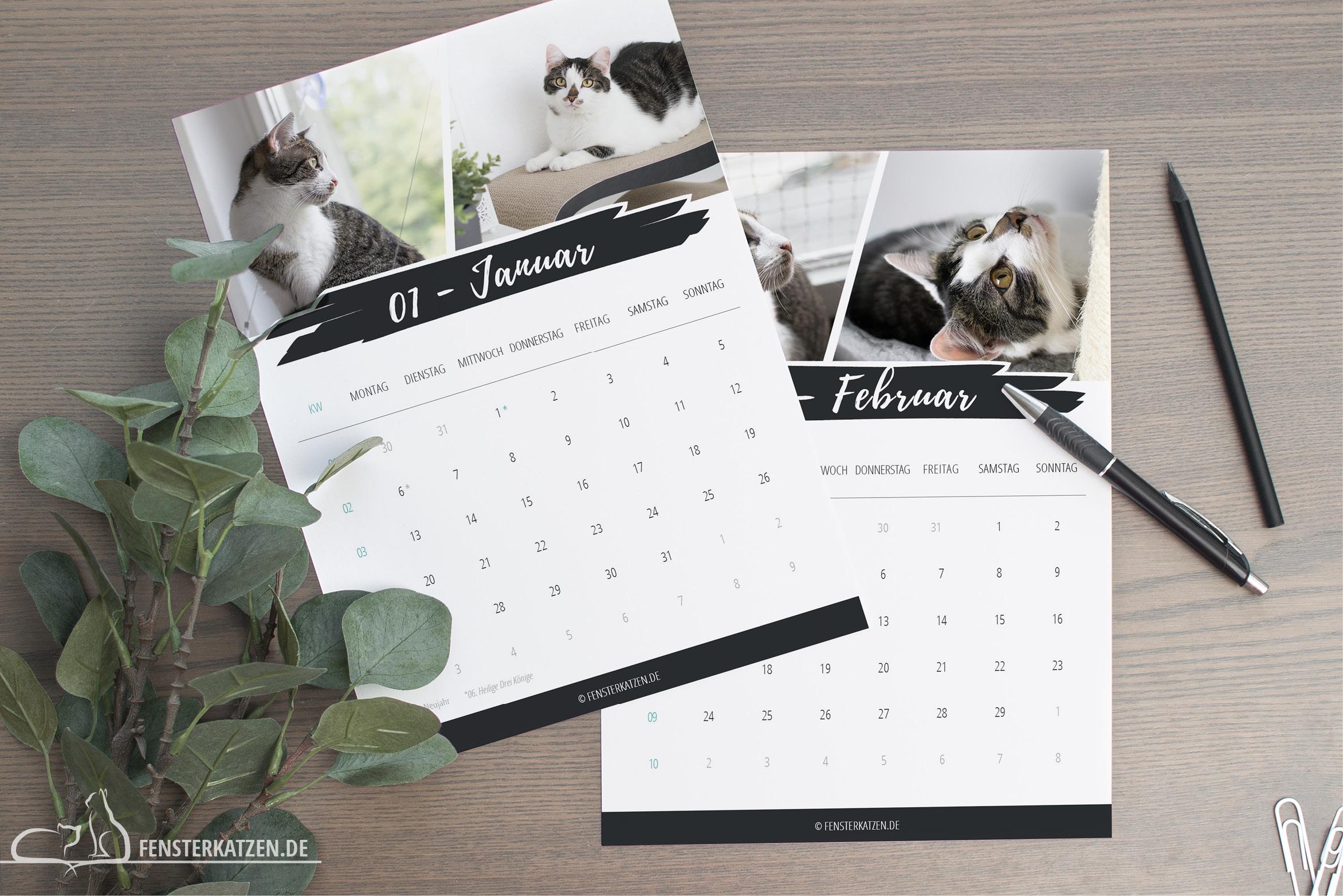 Fensterkatzen-News-Kalender-2020-Schlicht