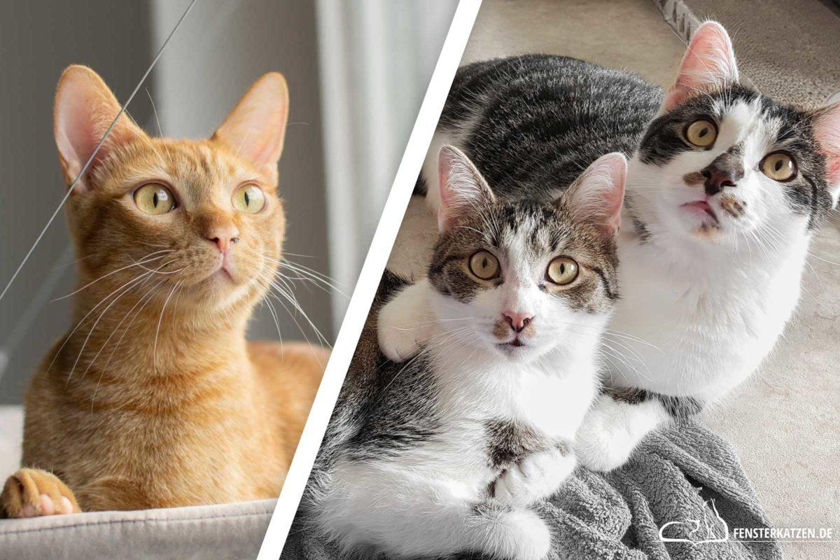Fensterkatzen-Eine-Oder-Zwei-Katzen-Titelbild