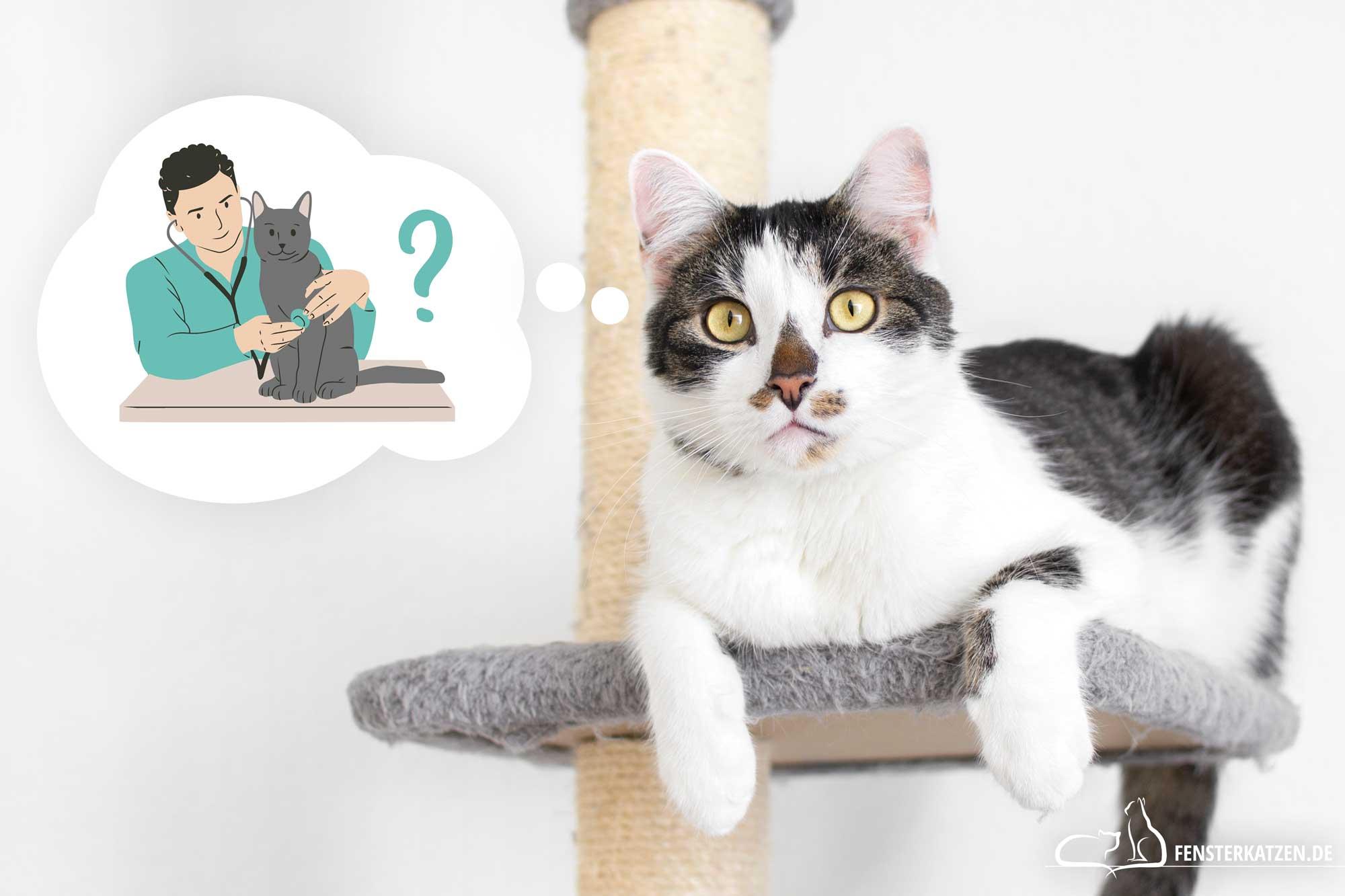 Fensterkatzen-Wahl-des-Tierarztes-Wie-finde-ich-einen-guten-Tierarzt-Titelbild