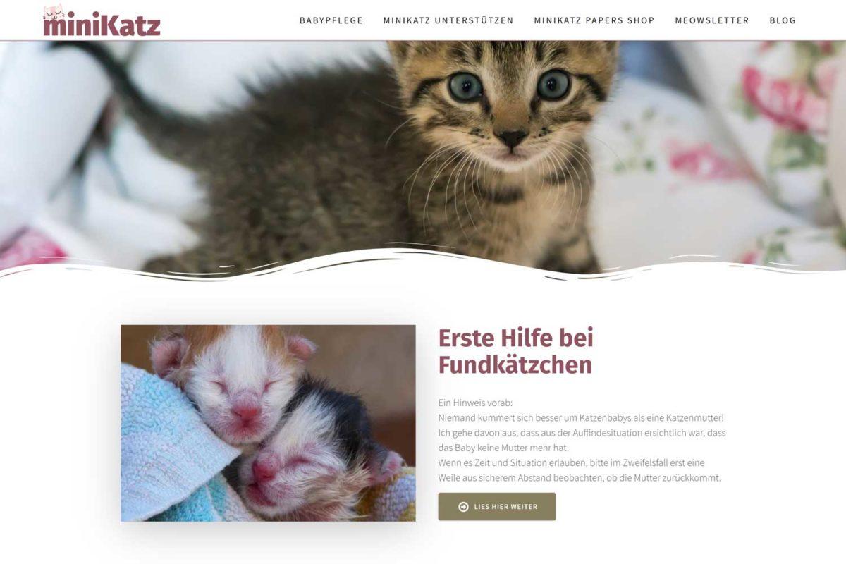 Empfehlung-Pflegestelle-Minikatz