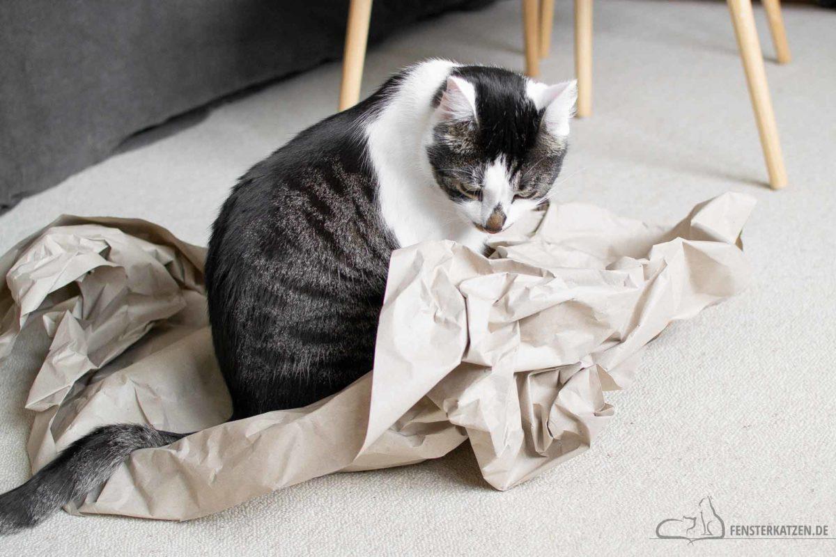 Fensterkatzen-Alltag-Upcycling-Katze-Beschaeftigen-Ideen-mit-Verpackungspapier-Titelbild