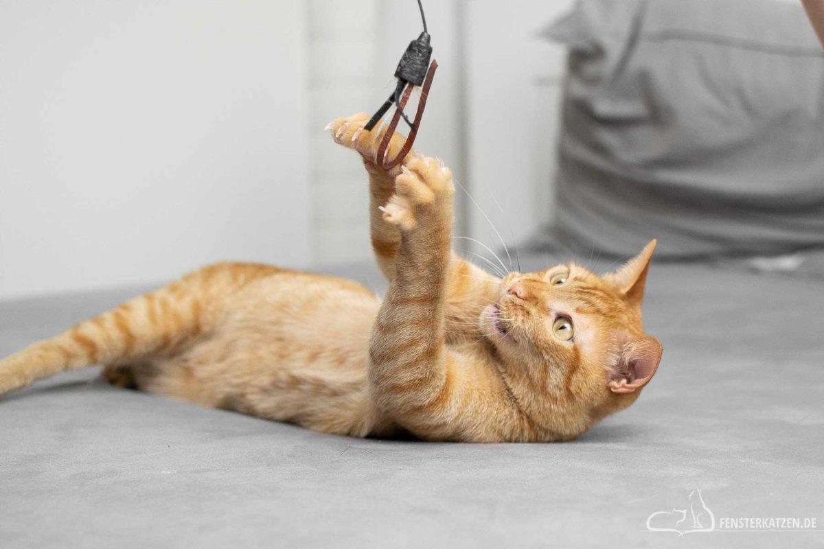 Fensterkatzen-Ratgeber-Wie-spielt-man-richtig-mit-Katzen-Kater-spielt-im-Liegen-mit-der-Spielangel