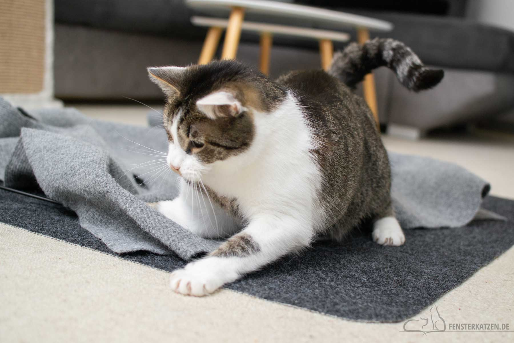 Fensterkatzen-Ratgeber-Wie-spielt-man-richtig-mit-Katzen-Katze-attackiert-Beute-1