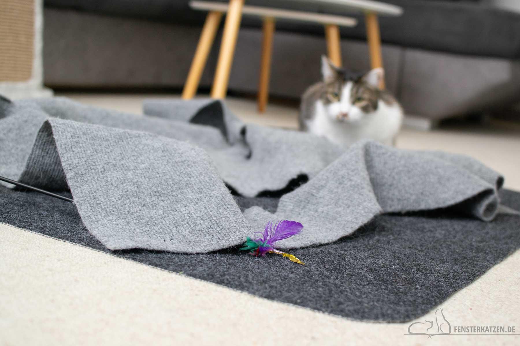 Fensterkatzen-Ratgeber-Wie-spielt-man-richtig-mit-Katzen-Katze-beobachtet-1