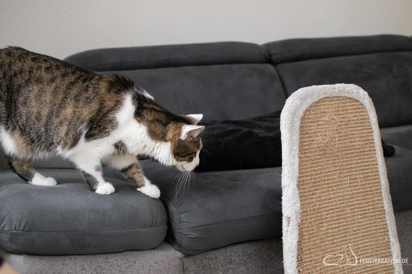 Fensterkatzen-Ratgeber-Wie-spielt-man-richtig-mit-Katzen-Katze-beobachtet-2