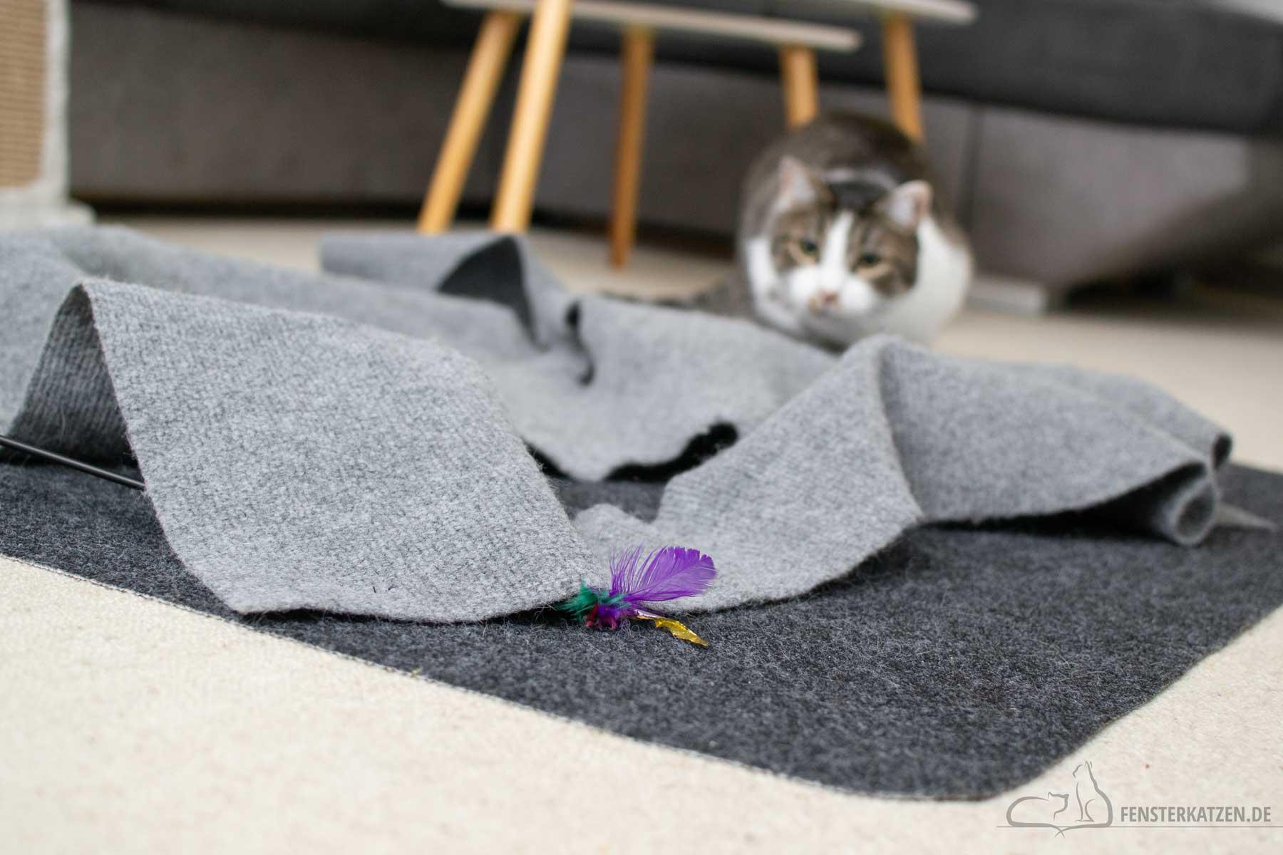 Fensterkatzen-Ratgeber-Wie-spielt-man-richtig-mit-Katzen-Katze-lauert-1