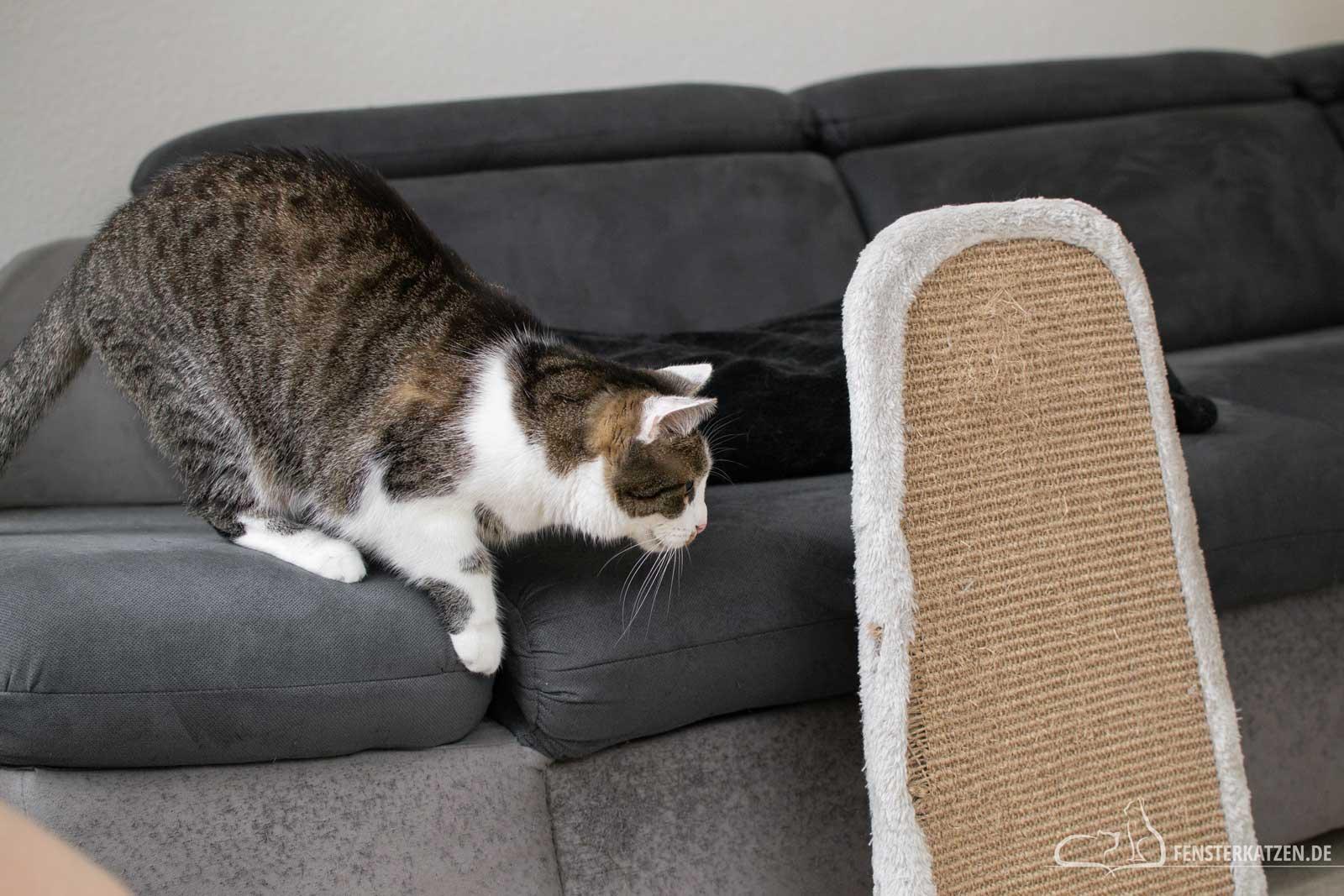 Fensterkatzen-Ratgeber-Wie-spielt-man-richtig-mit-Katzen-Katze-lauert-2