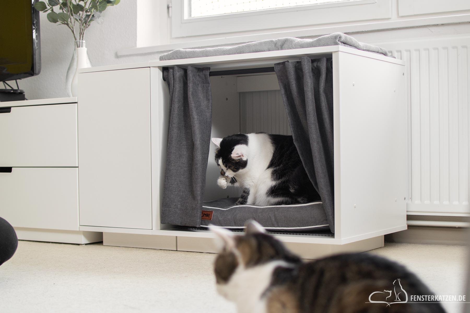 Fensterkatzen-Getestet-Maya-Nook-Katzenhaus-Omlet-Titelbild