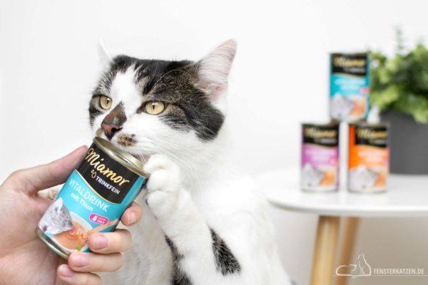 Fensterkatzen-Getestet-Trinkfein-Vitaldrink-Katze-Miamor-Titelbild