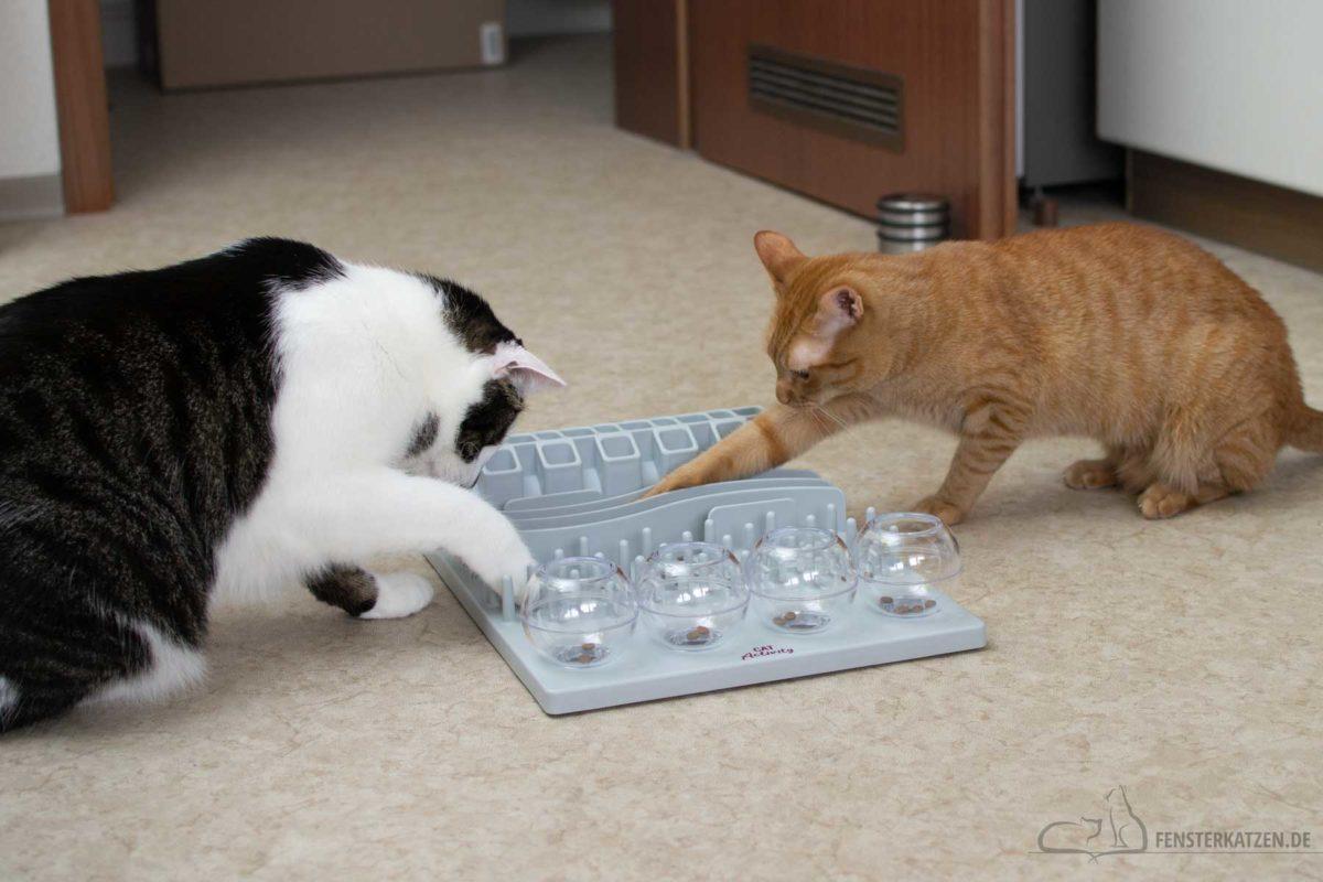 Fensterkatzen-Katzenblog-Katze-beschaeftigen-wenig-Zeit-Katzen-spielen-mit-TRIXIE-Fummelbrett-3
